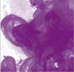Daler Rowney - Daler Rowney FW Acrylic Artist Ink 29.5ml Cam Şişe Purple Lake 437