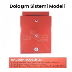 Anka Art - Dolaşım Sistemi Modeli