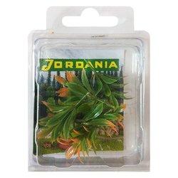 Jordania Çiçek Maketi 4cm 5li FLA1 - Thumbnail