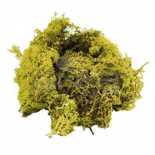 Jordania Zemin Yosunu Maketi 1013 Açık Yeşil - 1013 Açık Yeşil