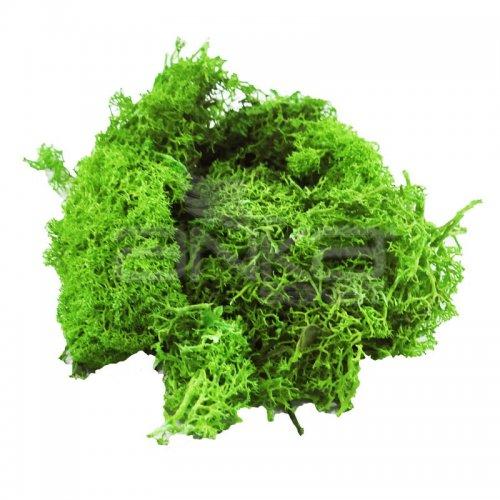 Jordania Zemin Yosunu Maketi 1515 Mayıs Yeşili - 1515 Mayıs Yeşili